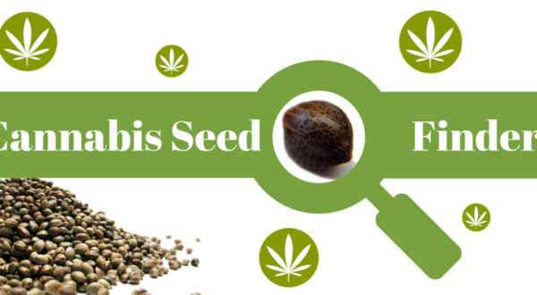 cannabis seed finder