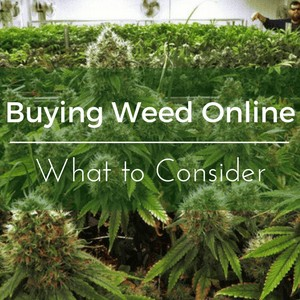 Buying Weed Online - What you should consider
