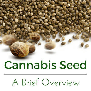 Cannabis Seeds - A Brief Overview