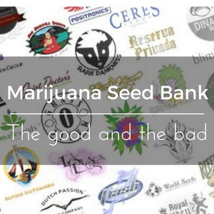 Marijuana Seed Bank - The good and the bad