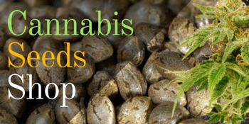 marijuana seed shop