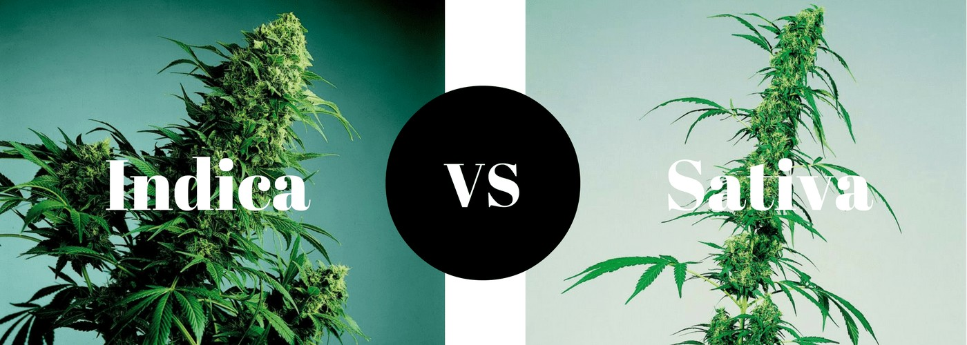 indica sativa difference