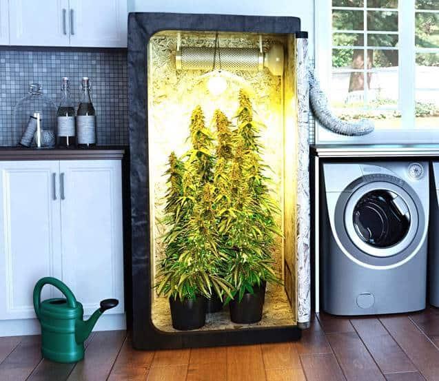 Cannabis Growbox