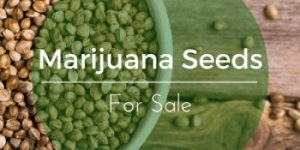 marijuana seeds for sale