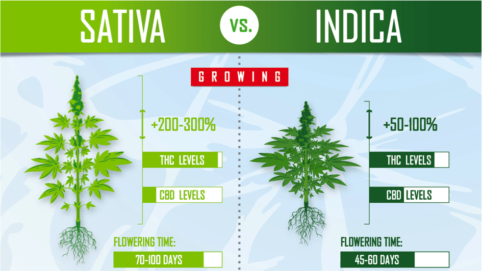 Sativa vs Indica Flowering