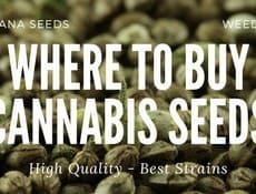 Where to buy Cannabis Seeds – Marijuana Seeds
