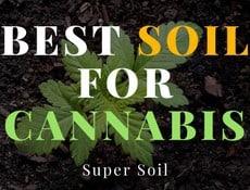best soil for cannabis