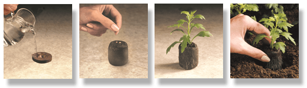 cannabis cultivation on Soil