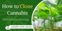 How to Clone Cannabis