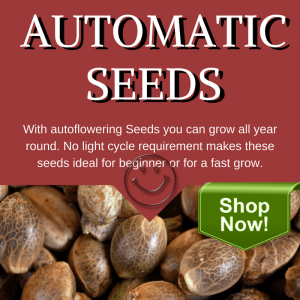 Automatic Cannabis Seeds