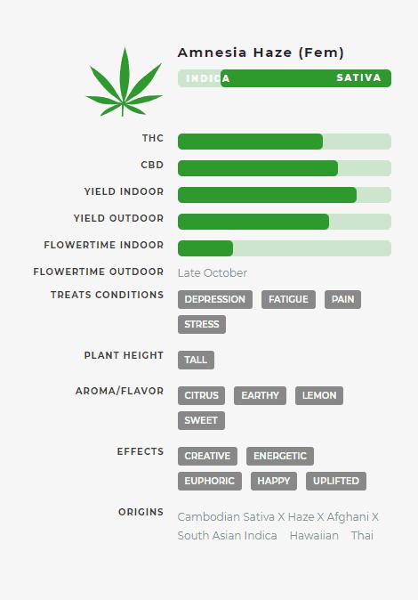Amnesia Haze (fem) Stats
