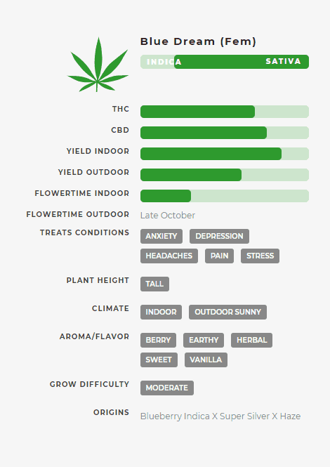 Blue Dream (fem) Stats