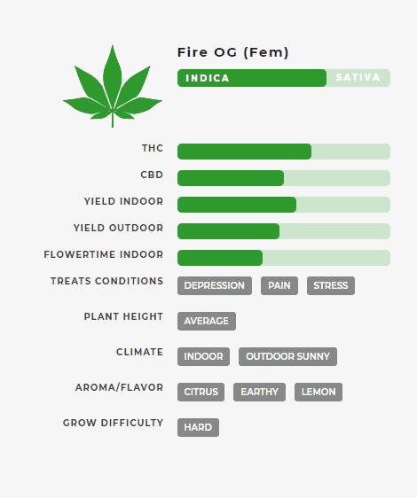 Fire OG (fem) Stats