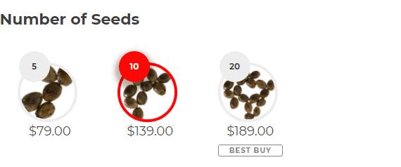 Number of Seeds Gold Leaf (fem)