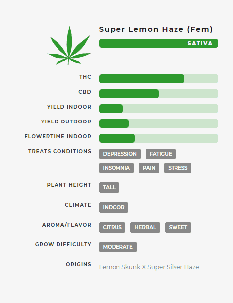 Super Lemon Haze (fem) Stats