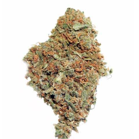white-widow-marijuana-seeds-1_large