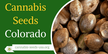 Cannabis Seeds Colorado – Infos & Seeds