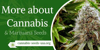 more about cannabis