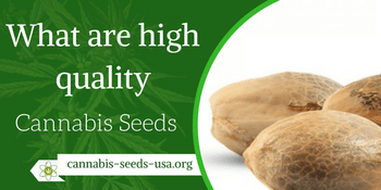 what are high quality cannabis seeds
