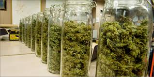 how to store cannabis 9