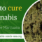 How to cure Cannabis – Dry and cure Marijuana