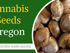 Cannabis Seeds Oregon