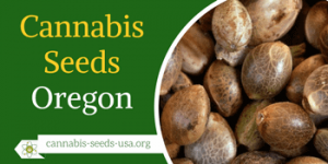 Cannabis Seeds Oregon