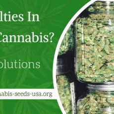 Facing difficulties In Storing Cannabis? – Check Solutions