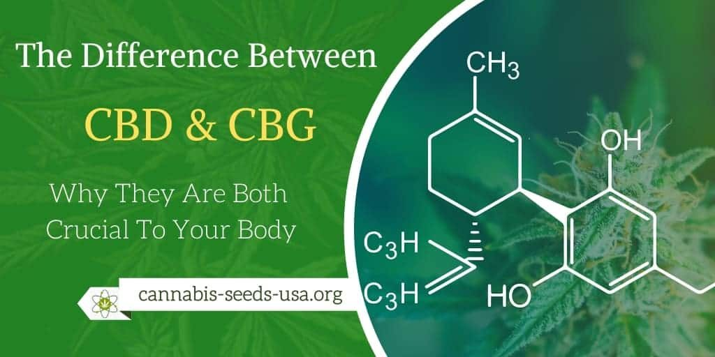 The Difference Between CBD & CBG Why They Are Both Crucial To Your Body
