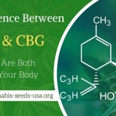 The Difference Between CBD & CBG: Why They Are Both Crucial To Your Body