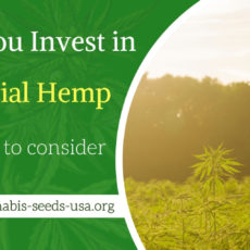 Top 5 Things Take in Mind Before You Invest in Industrial Hemp