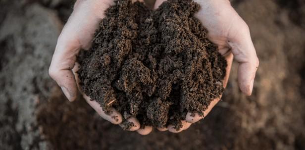 cannabis soil