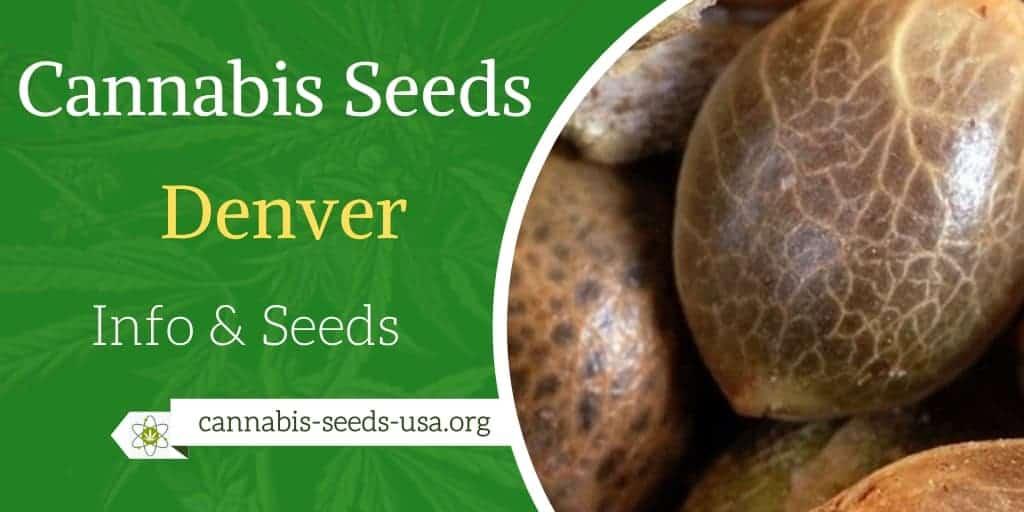 Cannabis Seeds Denver - Info & Seeds