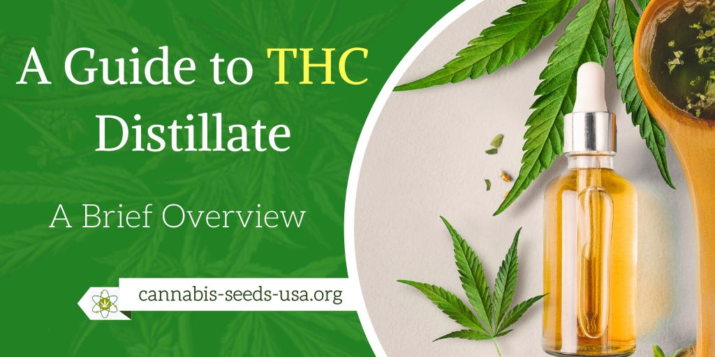 A Guide to THC Distillate