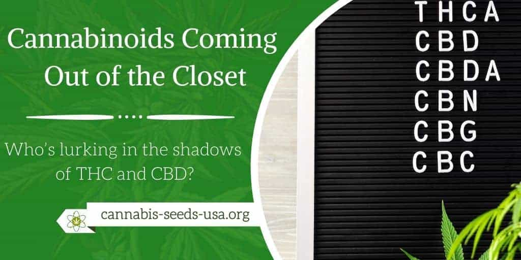 Cannabinoids Coming Out of the Closet Who's lurking in the shadows of THC and CBD