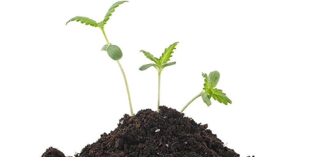 Feeding Seedlings