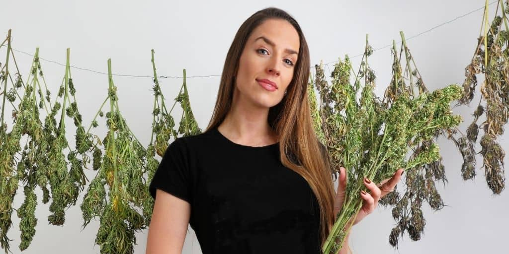 Drying Cannabis