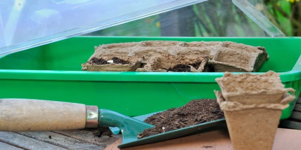 How to protect your Cannabis -Seedlings