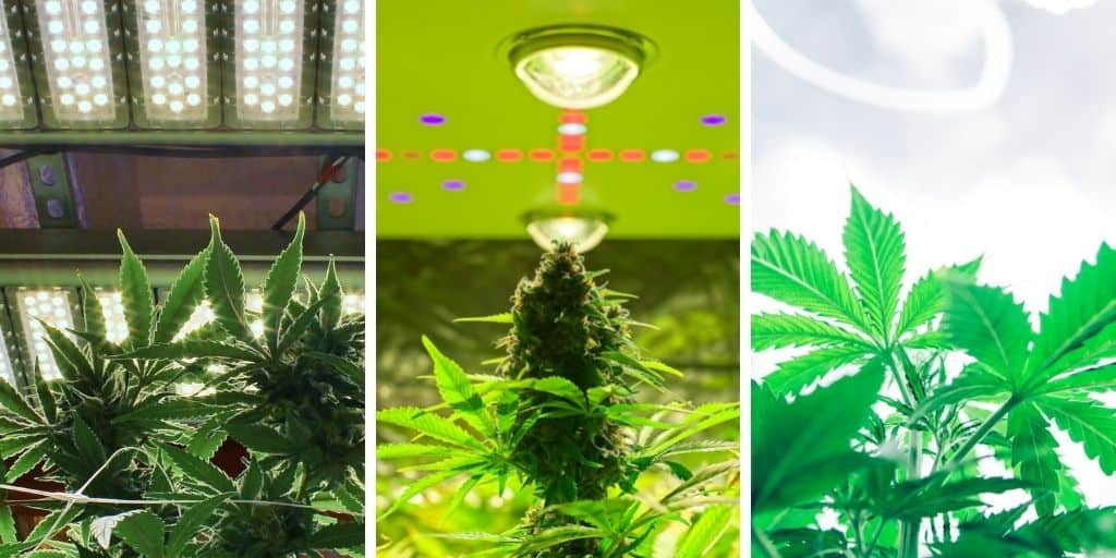 Select the right (Grow) light