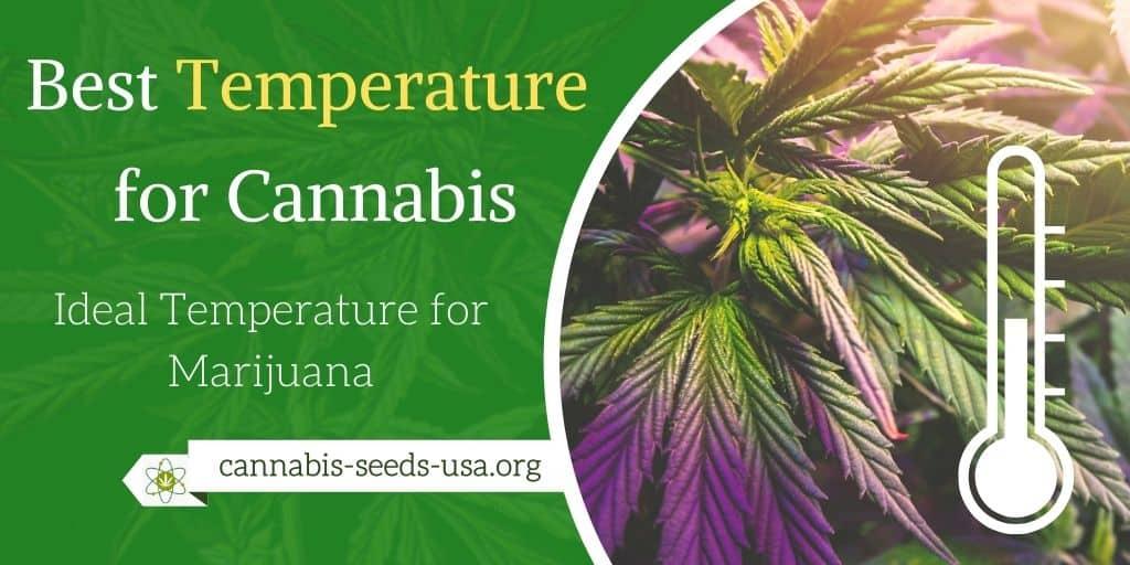 Best Temperature For Growing Cannabis - Ideal Temperature for Marijuana