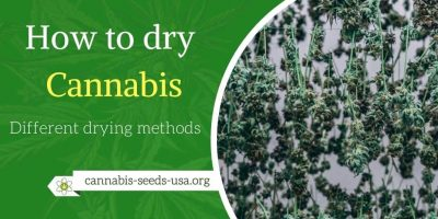 How to dry Cannabis – Different drying methods