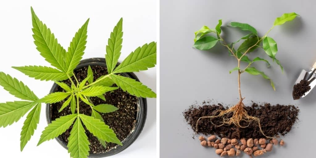The Important Part of Drainage for your Cannabis Plants