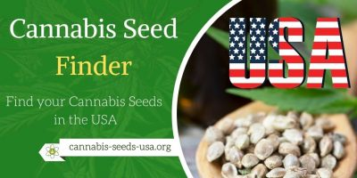 Cannabis Seed Finder Usa – Online Seed Banks for the US