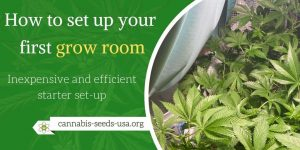 How to set up your first grow room - Inexpensive and efficient starter set-up