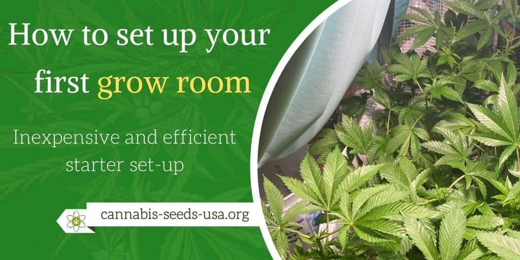 How to set up your first grow room – Inexpensive and efficient starter set-up