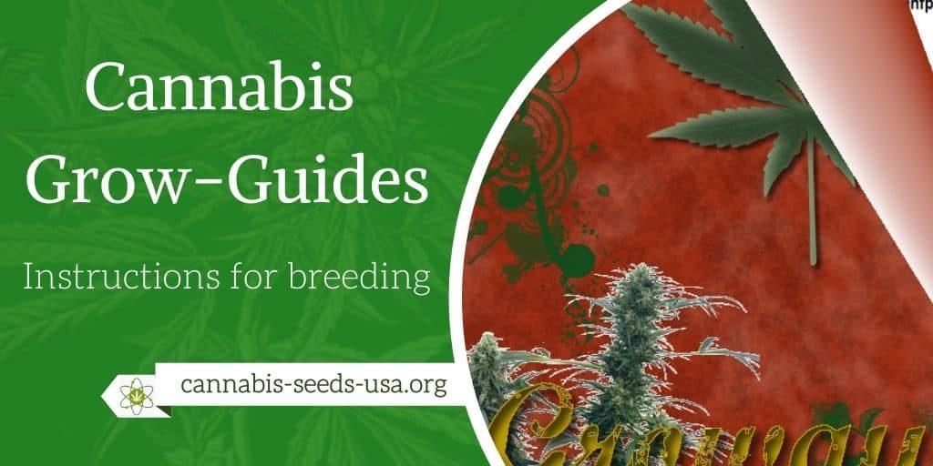 Cannabis Guides – Growguides & More