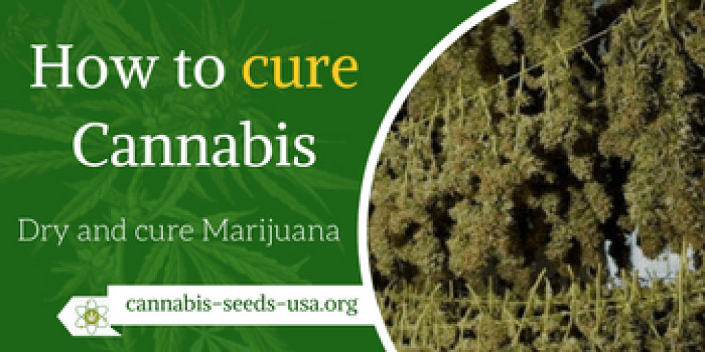 how to cure cannabis