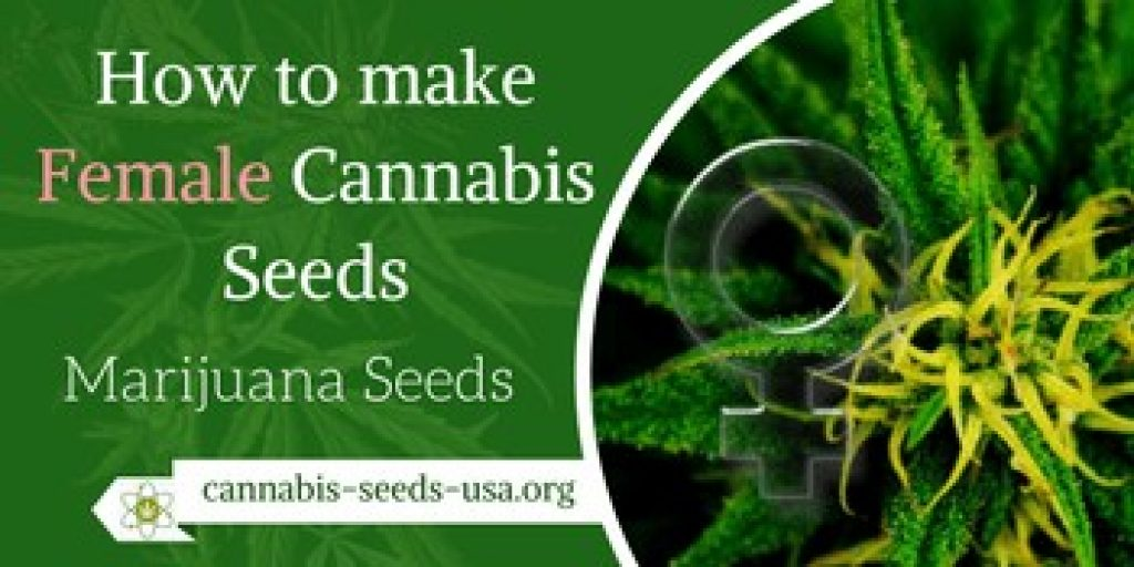 How to make Female Cannabis Seeds