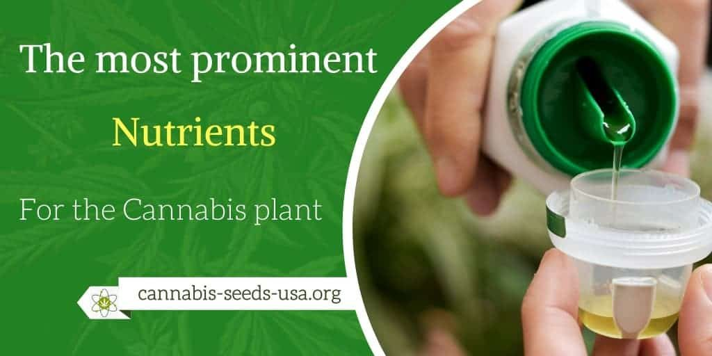 The-most-prominent-nutrients-for-the-Cannabis-plant
