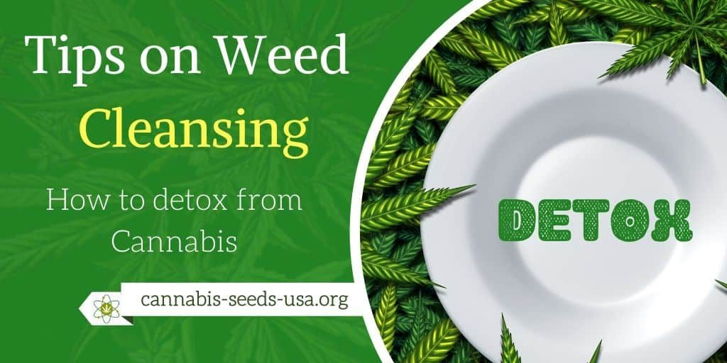 Tips on Weed Cleansing - How to detox from Cannabis